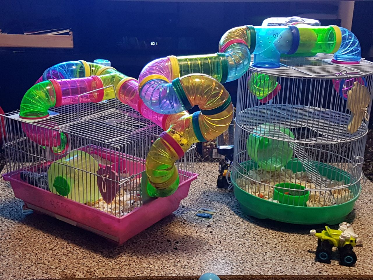 Hamsters with all accessories must go