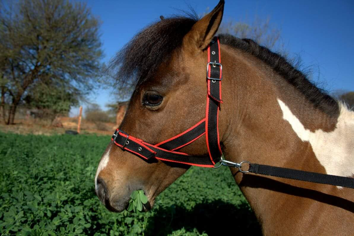 new halters and flymasks