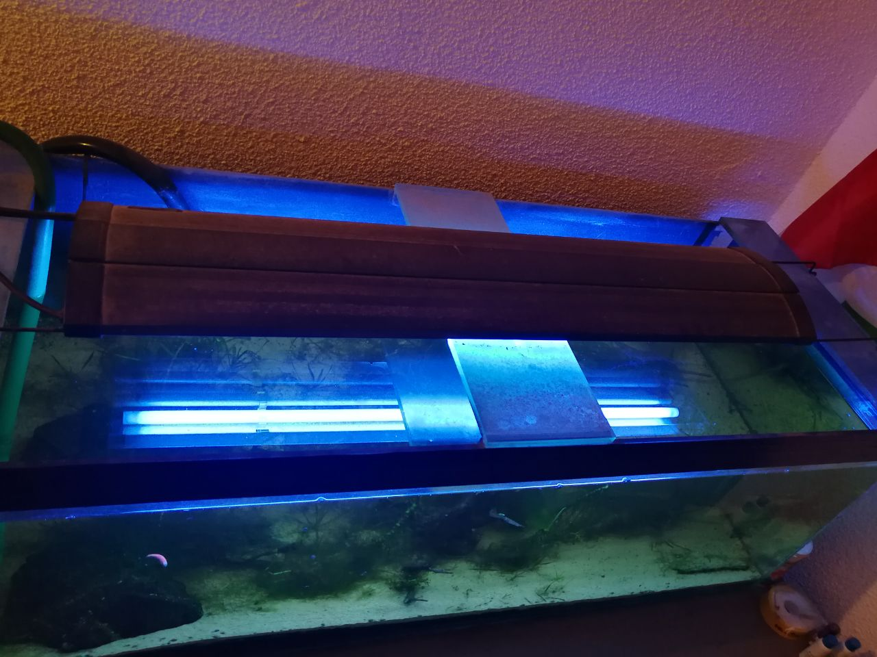 BIG Fish tank with lights and ground Filter