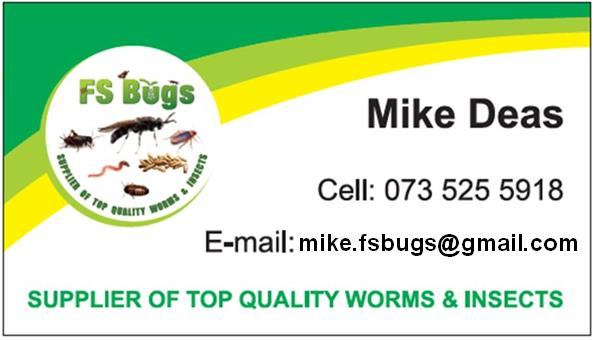 FS Bugs: 100 FS Grubs, high protein live feed for exotic pets