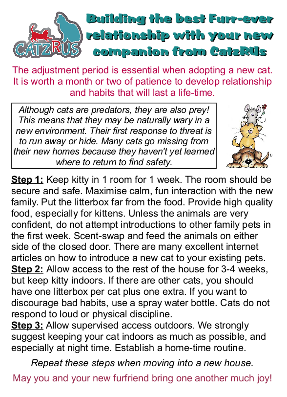 'Mami' and the benefits of adopting an adult cat from CatzRUs: