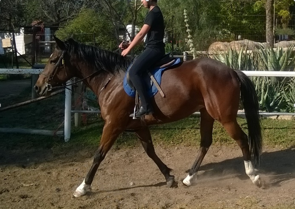Pretty Bay Mare for sale