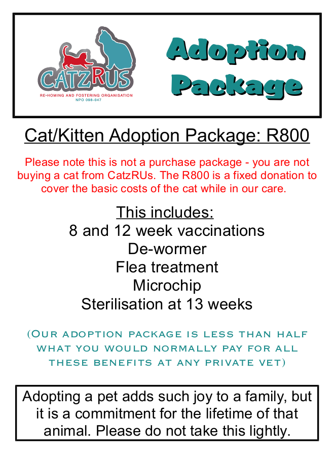 This Ginger Female is the ultimate companion-cat! R800 covers various veterinary costs.