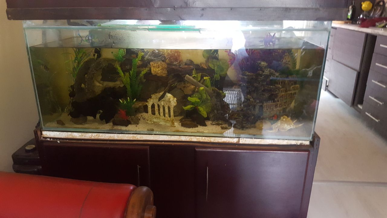 4ft fish tank in cabinet